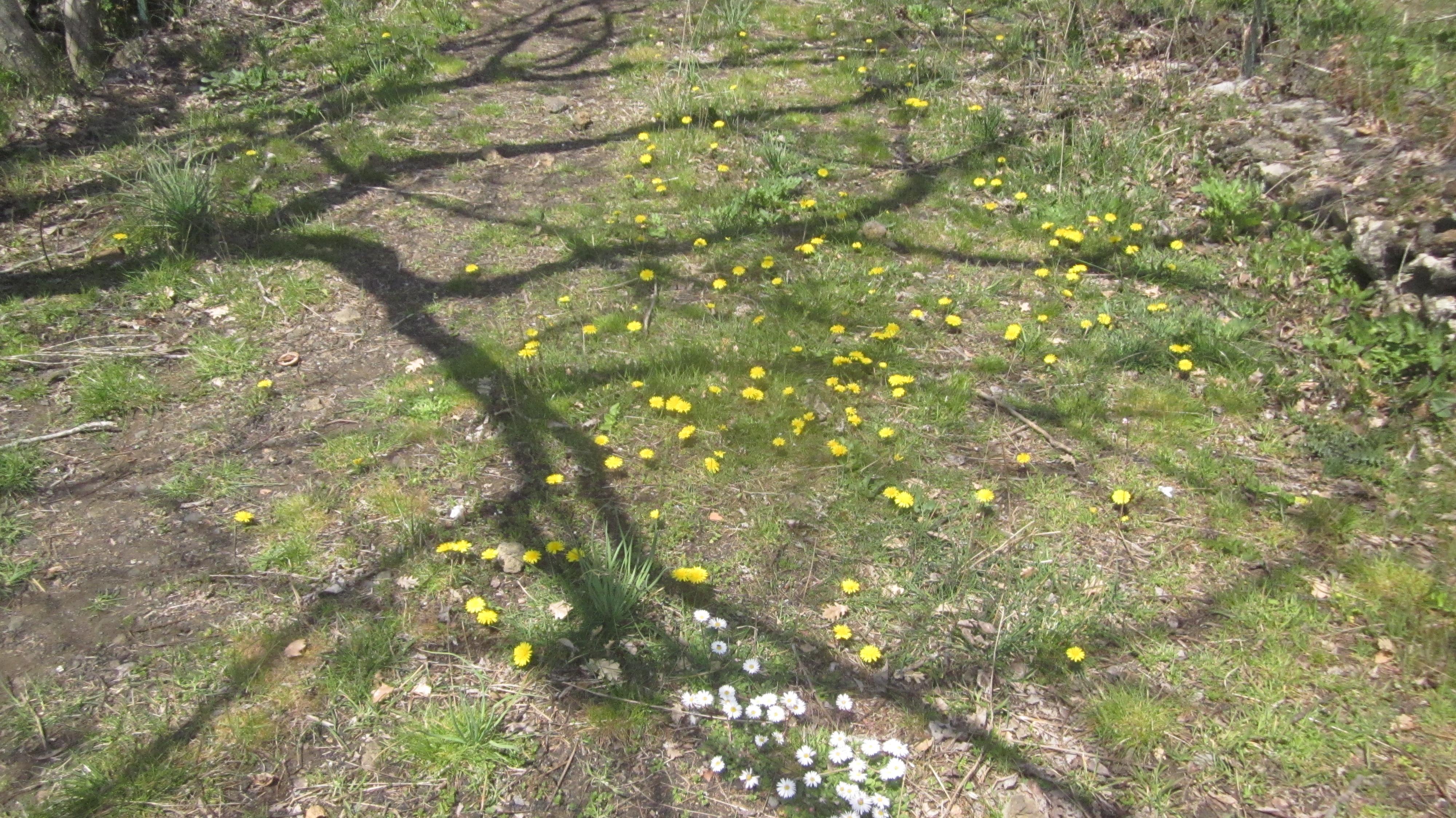 Erwecke den Frühling in dir!