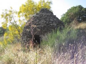 Ginster und Lavahütte am Etna