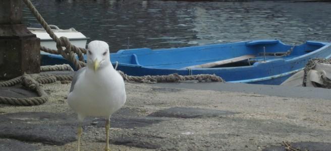 Punta Secca Hafen
