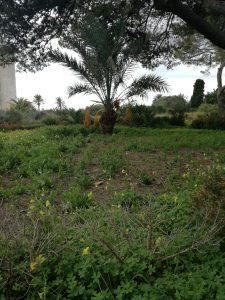 Garten von Donnafugata