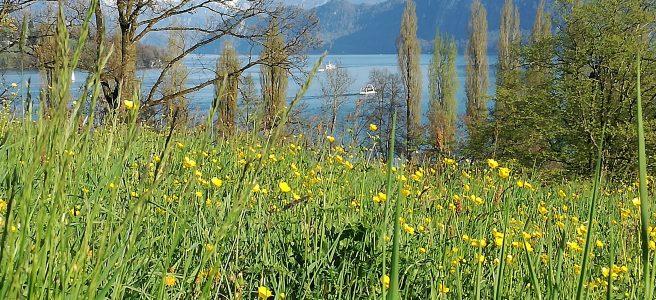 Luzern-Tribsche terrasse