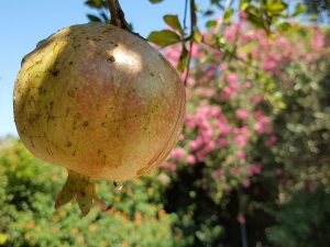 Worte sind reife Granatäpfel-Programm zur KLP 2019