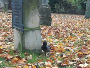 Garnisonsfriedhof Berlin, Heidrun Adriana Bomke